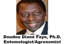 Maat, la Punaise de Lit.  On ne dort plus! Dr. D. D. Faye. Entomologiste